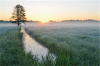 streams scenic nobody - Tree and field at sunrise, Nature Reserve Moenchbruch, Moerfelden-Walldorf, Hesse, Germany, Europe Stock Photo - Premium Royalty-Freenull, Code: 600-07599902