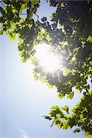 streaming - Low angle view of tree branches and blue sky with sun, Germany Stock Photo - Premium Royalty-Freenull, Code: 600-07600017