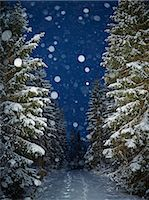 forward - Snowing in forest at night, Vastergotland, Sweden Stock Photo - Premium Royalty-Freenull, Code: 6102-07603010