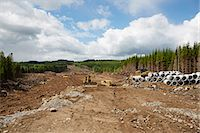 Forest cut, Vastergotland, Sweden Stock Photo - Premium Royalty-Freenull, Code: 6102-07603012
