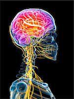 Active brain, computer artwork. Stock Photo - Premium Royalty-Freenull, Code: 679-07603724