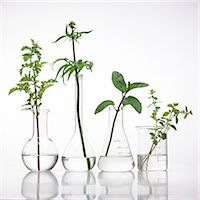 pharmaceutical plant - Medicinal plants, conceptual image. Stock Photo - Premium Royalty-Freenull, Code: 679-07604372