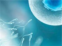 sperme - Egg and sperm, computer artwork. Stock Photo - Premium Royalty-Freenull, Code: 679-07604428