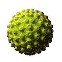 Herpes virus, computer artwork. Stock Photo - Premium Royalty-Freenull, Code: 679-07604534