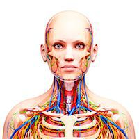 Female anatomy, computer artwork. Stock Photo - Premium Royalty-Freenull, Code: 679-07605123