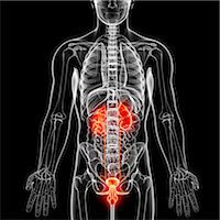 Male anatomy, computer artwork. Stock Photo - Premium Royalty-Freenull, Code: 679-07605352