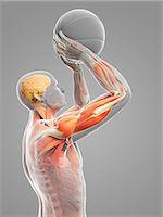 spinal column - Male anatomy, computer artwork. Stock Photo - Premium Royalty-Freenull, Code: 679-07607115