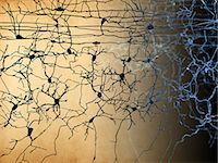 Artwork of nerve cells. Stock Photo - Premium Royalty-Freenull, Code: 679-07608066