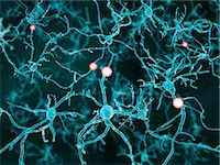 Artwork of nerve cells. Stock Photo - Premium Royalty-Freenull, Code: 679-07608068