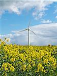 Wind turbine and canola field, Weser Hills, North Rhine-Westphalia, Germany