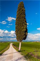 Lonely cypress tree, Corsanello, Siena, Tuscany, Italy Stock Photo - Premium Rights-Managed, Artist: AWL Images, Code: 862-07650649