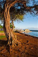 Park on the coast of Lahaina, Maui, Hawaii, United States of America, Pacific Stock Photo - Premium Rights-Managed, Artist: Robert Harding Images, Code: 841-07653408