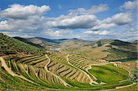 Terraced vineyards along the Douro river during the grapes harvest. Ervedosa do Douro, A Unesco World Heritage Site, Portugal Stock Photo - Premium Rights-Managed, Artist: AWL Images, Code: 862-07690681