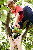 Children picking fruit from tree Stock Photo - Premium Royalty-Freenull, Code: 6122-07704852