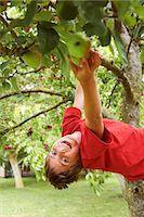 Smiling boy picking fruit in tree Stock Photo - Premium Royalty-Freenull, Code: 6122-07704853