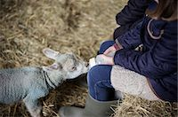 farming (raising livestock) - A girl bottle feeding a small hungry lamb. Stock Photo - Premium Royalty-Free, Artist: Robert Harding Images, Code: 6118-07731811