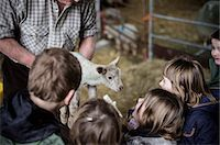 domestic sheep - Children and new-born lambs in a lambing shed. Stock Photo - Premium Royalty-Freenull, Code: 6118-07731817