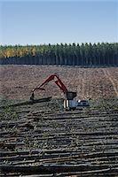 forestry - A mechanised grabber sorting felled poplar tree trunks on a plantation. Stock Photo - Premium Royalty-Free, Artist: Aflo Relax, Code: 6118-07731826