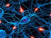 Nerve cell network, computer artwork. Stock Photo - Premium Royalty-Freenull, Code: 679-07732495