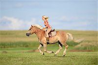 Young woman riding a haflinger horse in a field in summer, Upper Palatinate, Bavaria, Germany Stock Photo - Premium Rights-Managednull, Code: 700-07734370