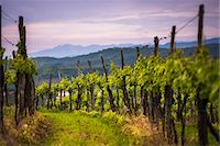 Vineyards and mountains near Smartno in the Goriska Brda wine region of Slovenia, Europe Stock Photo - Premium Royalty-Freenull, Code: 6119-07744524