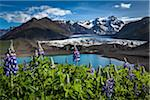Scenic view of glacier and mountains with spring flowers, Svinafellsjokull, Skaftafell National Park, Iceland