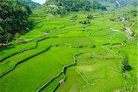philippine terrace farming - Hapao rice terraces, Banaue, UNESCO World Heritage Site, Luzon, Philippines, Southeast Asia, Asia Stock Photo - Premium Royalty-Freenull, Code: 6119-07781247
