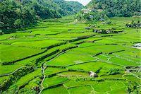 philippine terrace farming - Hapao rice terraces, Banaue, UNESCO World Heritage Site, Luzon, Philippines, Southeast Asia, Asia Stock Photo - Premium Royalty-Freenull, Code: 6119-07781248