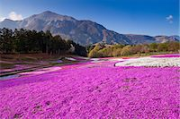 scenic and spring (season) - Saitama Prefecture, Japan Stock Photo - Premium Rights-Managednull, Code: 859-07783445