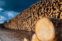Pile of lumber Stock Photo - Premium Royalty-Freenull, Code: 6102-07789544
