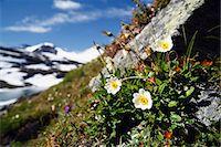 Close-up of white flowers Stock Photo - Premium Royalty-Freenull, Code: 6102-07790093