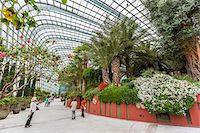 Flower Dome, Gardens by the Bay, Singapore Stock Photo - Premium Rights-Managednull, Code: 700-07802659