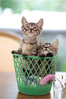 Domestic cats Stock Photo - Premium Royalty-Freenull, Code: 622-07810893