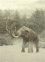 prehistoric - Woolly mammoth in snow Stock Photo - Premium Royalty-Freenull, Code: 679-07814058