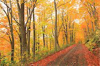 Autumn colors, Aomori Prefecture, Japan Stock Photo - Premium Royalty-Freenull, Code: 622-07841346