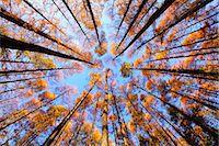 Autumn leaves Stock Photo - Premium Royalty-Freenull, Code: 622-07841393