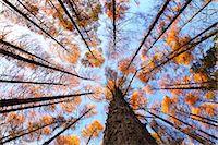 Autumn leaves Stock Photo - Premium Royalty-Freenull, Code: 622-07841395