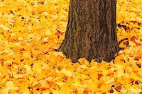 Autumn leaves Stock Photo - Premium Royalty-Freenull, Code: 622-07841407