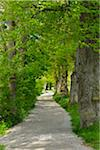 Lakeside Path with Trees, Stegen am Ammersee, Lake Ammersee, Fuenfseenland, Upper Bavaria, Bavaria, Germany