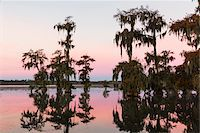 Swamp Cypress Trees (Taxodium distichum) in Autumn at Dawn, Lake Martin, Louisiana, USA Stock Photo - Premium Royalty-Freenull, Code: 600-07844476