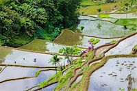 philippine terrace farming - Asia, South East Asia, Philippines, Cordilleras, Banaue; a local farmer working in the UNESCO World heritage listed Ifugao rice terraces near Banaue Stock Photo - Premium Rights-Managednull, Code: 862-07910419