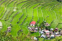 philippine terrace farming - Asia, South East Asia, Philippines, Cordilleras, Banaue; Batad, Zoe Logos church and village houses in the UNESCO World heritage listed Ifugao rice terraces of the Philippine cordilleras Stock Photo - Premium Rights-Managednull, Code: 862-07910420