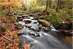 Landscape of a river (Keine Ohe) flowing through the forest in autumn, Bavarian Forest National Park, Bavaria, Germany