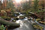 Landscape of a river (Kleine Ohe) flowing through the forest in autumn, Landscape of a river (Kleine Ohe) flowing through the forest in autumn, Bavarian Forest National Park, Bavaria, Germany