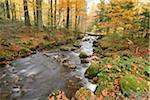 Landscape of a river (Kleine Ohe) flowing through the forest in autumn, Bavarian Forest National Park, Bavaria, Germany