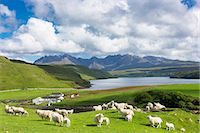 farming (raising livestock) - The Cuillin mountain range with croft farm, sheep and Loch Harport near Coillure, Isle of Skye, Inner Hebrides, Highlands and Islands, Scotland, United Kingdom, Europe Stock Photo - Premium Rights-Managednull, Code: 841-07913714
