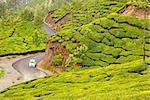 Plush Slopes of Tea Hills