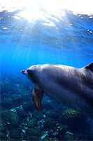 fantastically - Dolphin swimming underwater Stock Photo - Premium Rights-Managednull, Code: 859-07961773