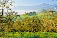 Podere Belvedere near San Quirico d'Orcia, Val d'Orcia, Siena, Tuscany, Italy Stock Photo - Premium Royalty-Freenull, Code: 600-07966038