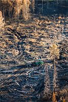 Forest cut, aerial view Stock Photo - Premium Royalty-Freenull, Code: 6102-08000507